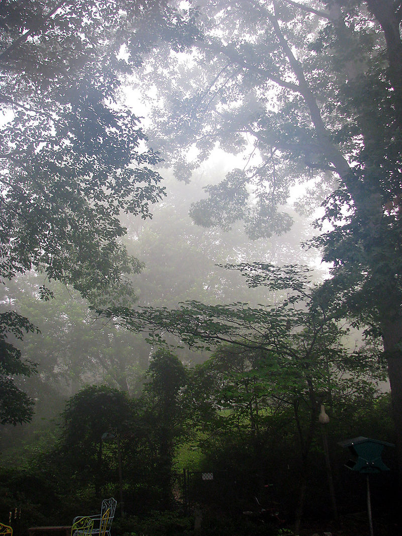 Misty Morn 1