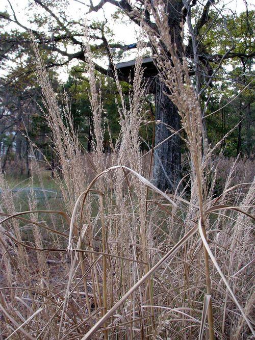 River tree house