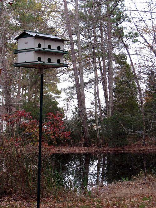 River martin house pond