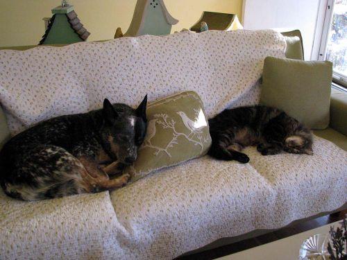 Sheila Gyro couch