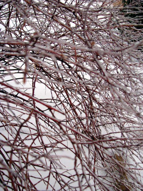 ICE branches