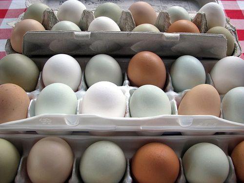 FM eggs