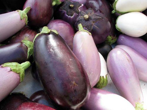 FCFM eggplants