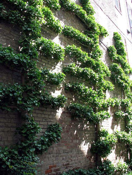 Alex topiary
