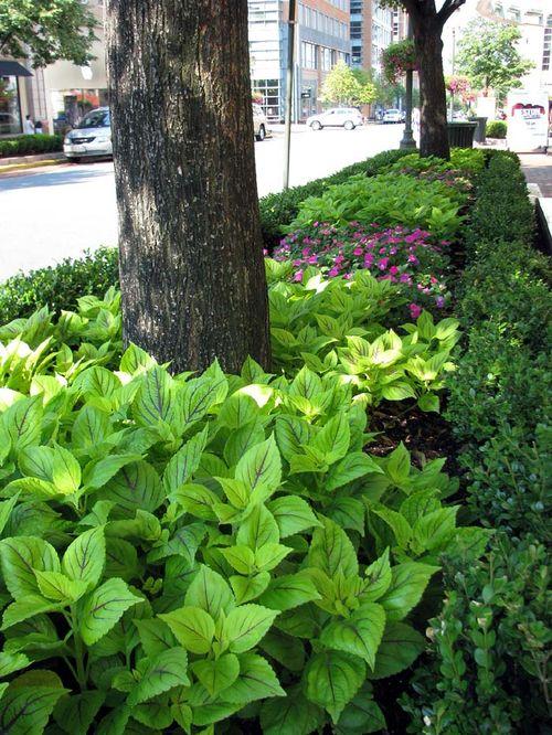 Reston plantings