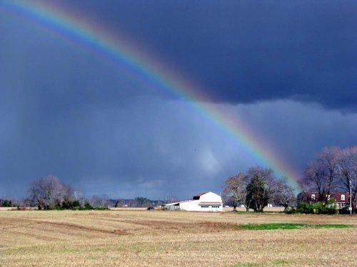 River rainbow best