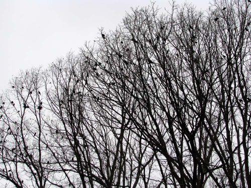 Birds distant