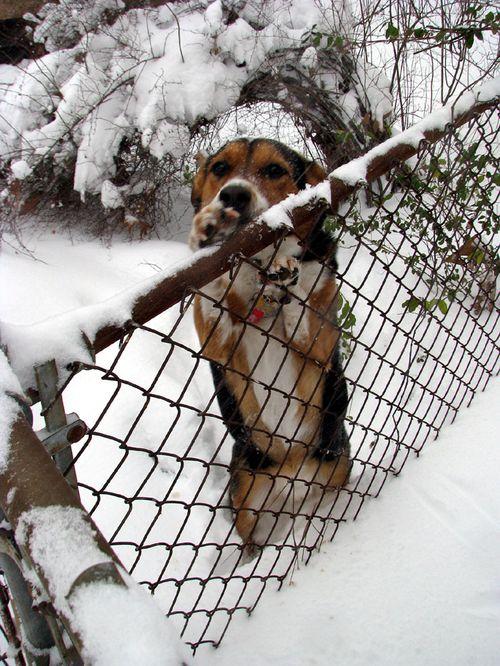 Snow Charlie