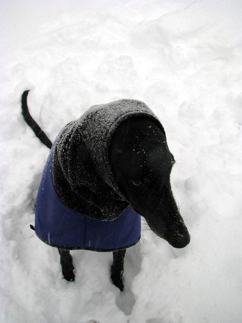 Snow Cleo