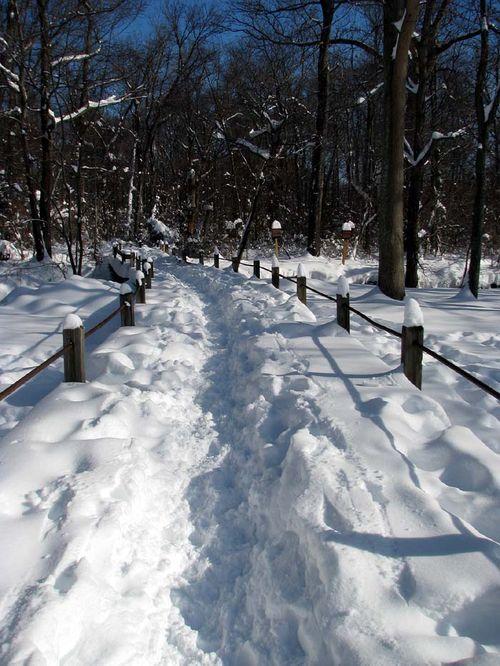 12-20 Snow Luria Park walk