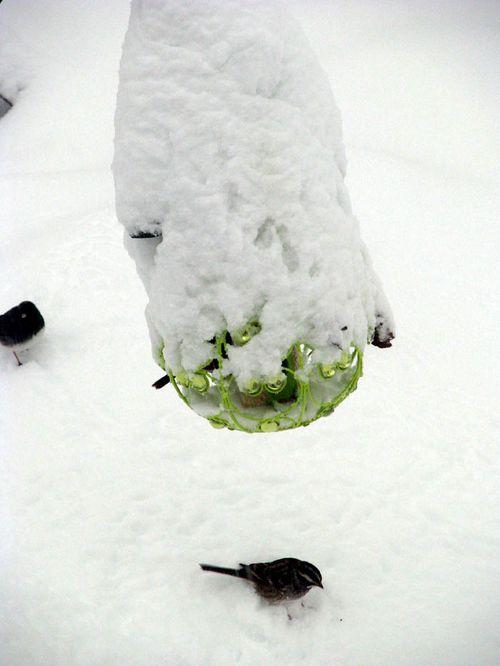 2-6 snow birdfeeder