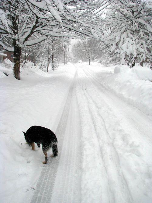 2-6 snow sheila road