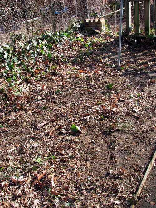 Winter yard bare garden