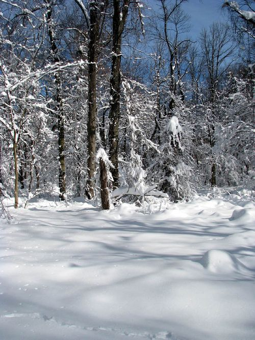 2-7 snow luria forest