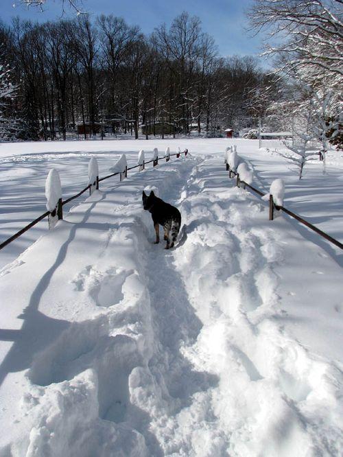 2-7 snow luria trail sheila