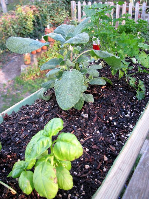 4-7 Garden herbs