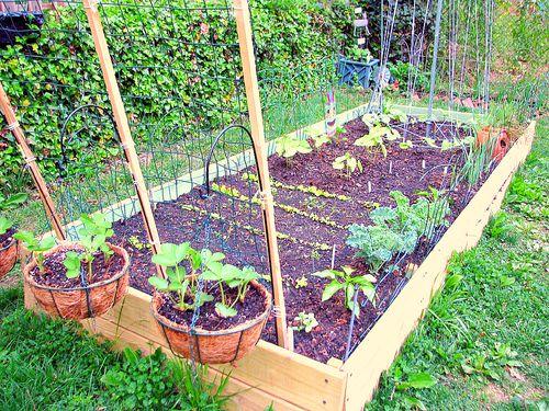 Earth Day Garden 1