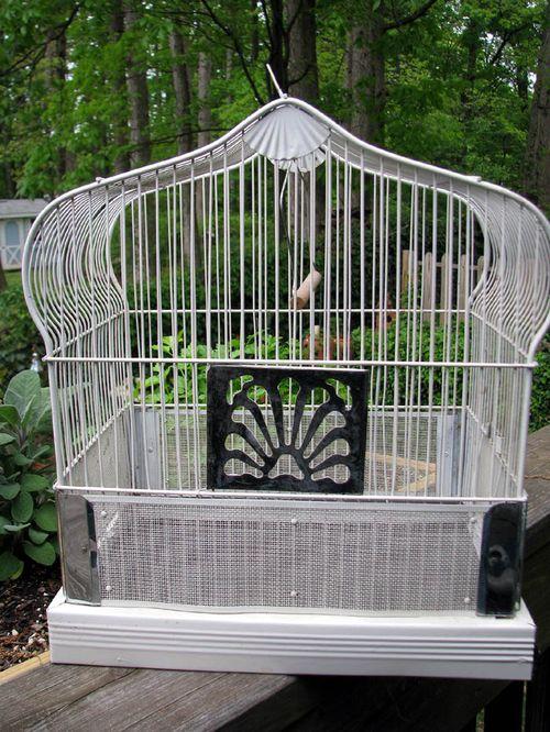 Birdcage 1