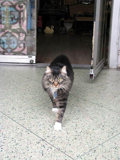 EC cat
