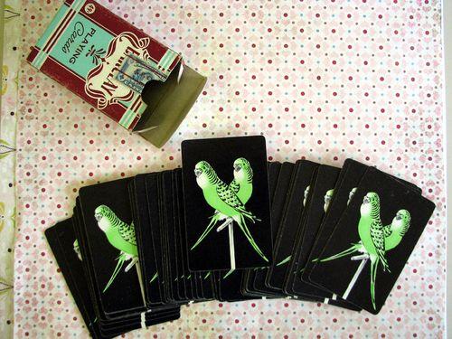 Parakeet cards