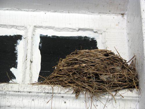 FC house nest
