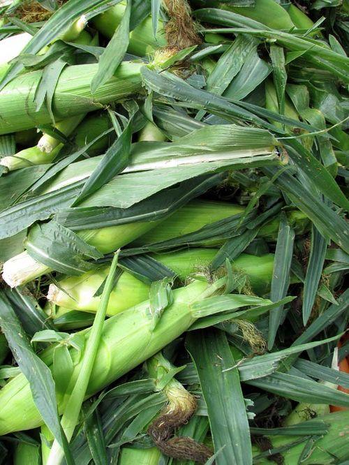FM corn