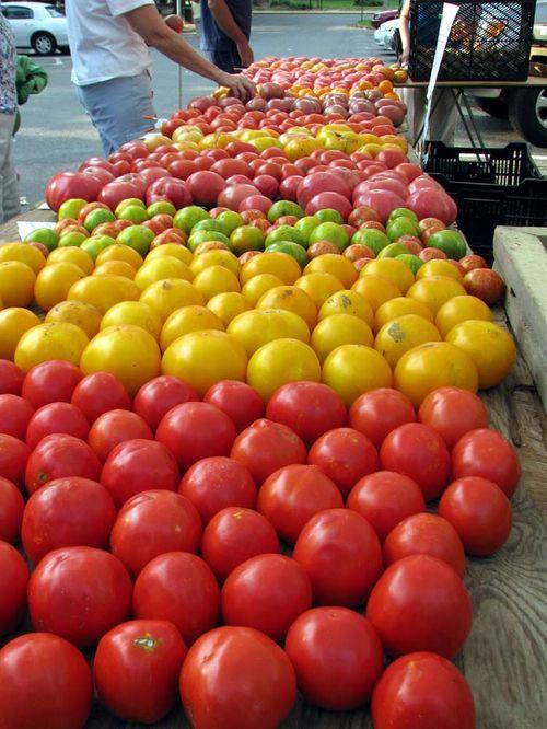FM tomato rainbow