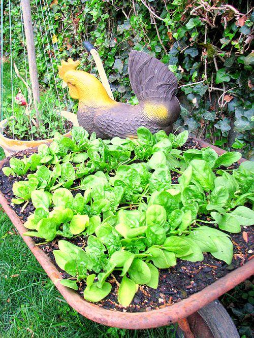 Earth Day Garden 2
