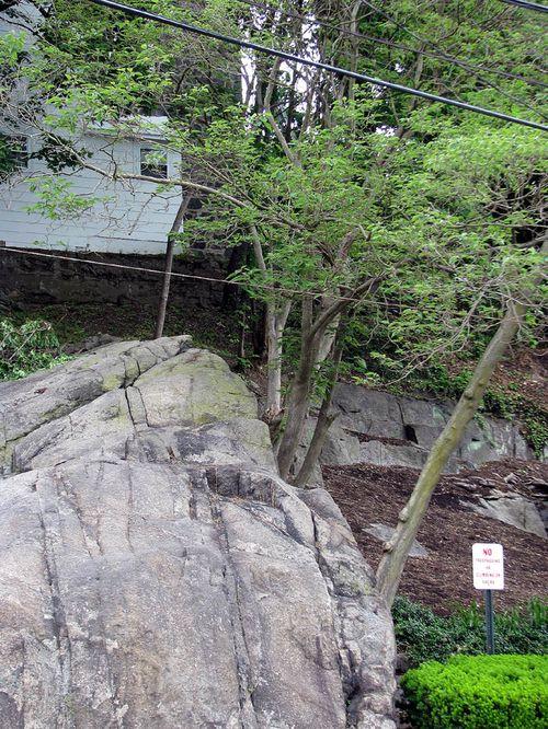 EC tree rock