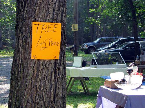Shupps tree