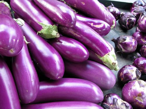 FM eggplant