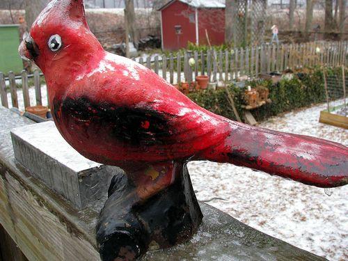 Ice on Cardinal
