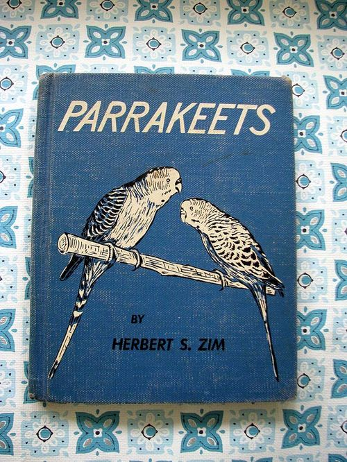 Parrakeets 1