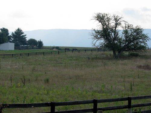 Yard Crawl Pasture