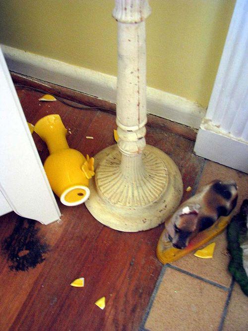 Earthquake vase broken