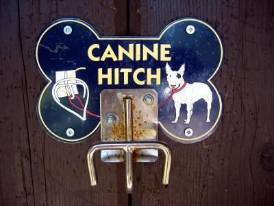 Notchdoghitch