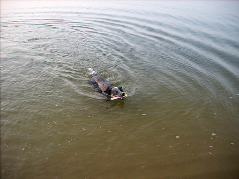 River_dog