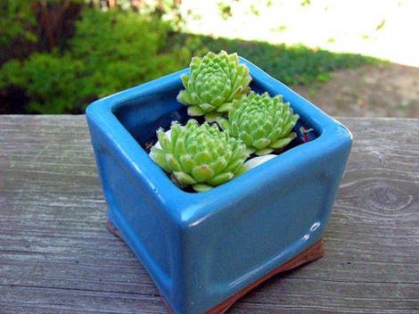 Small_plants