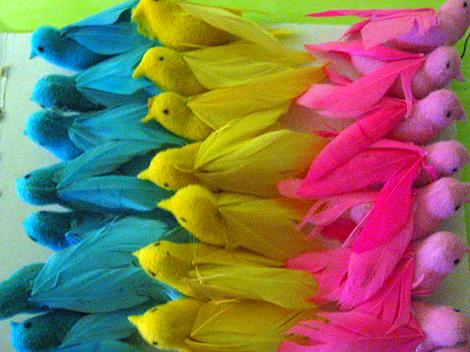 Blog_1015_birds