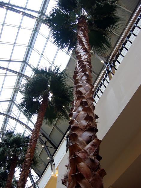 Mall_palms