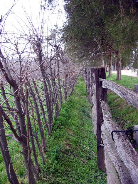Mt_vernon_fence