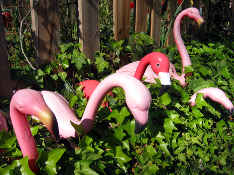 Ah_spring_flamingos