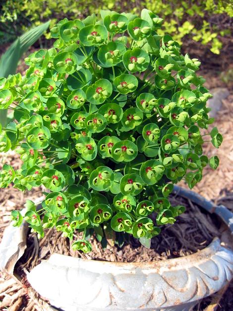 Ah_spring_wierd_plant
